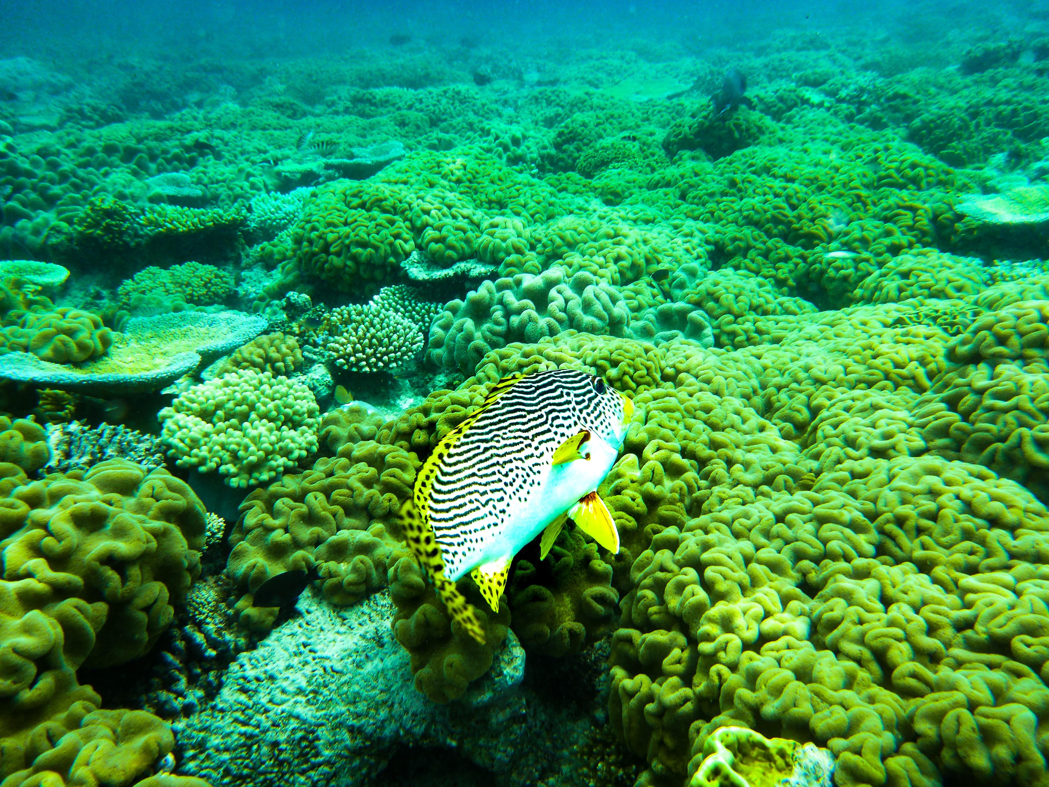 Great Berrier Reef