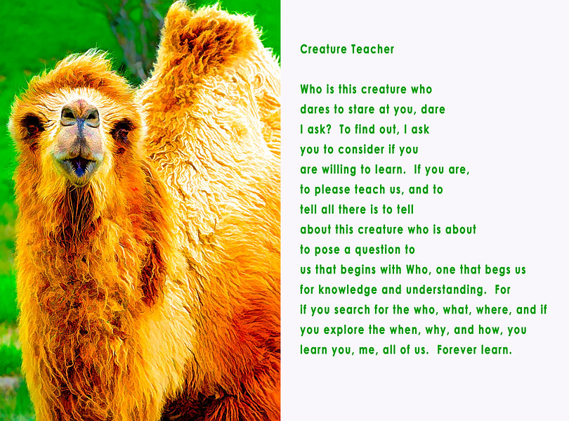 Creature Teacher photo poem.jpg