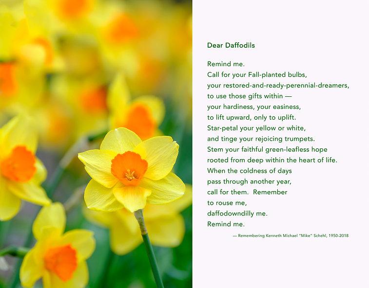Dear Daffodils poem photo.JPG