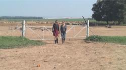 Sheep Farm - 2