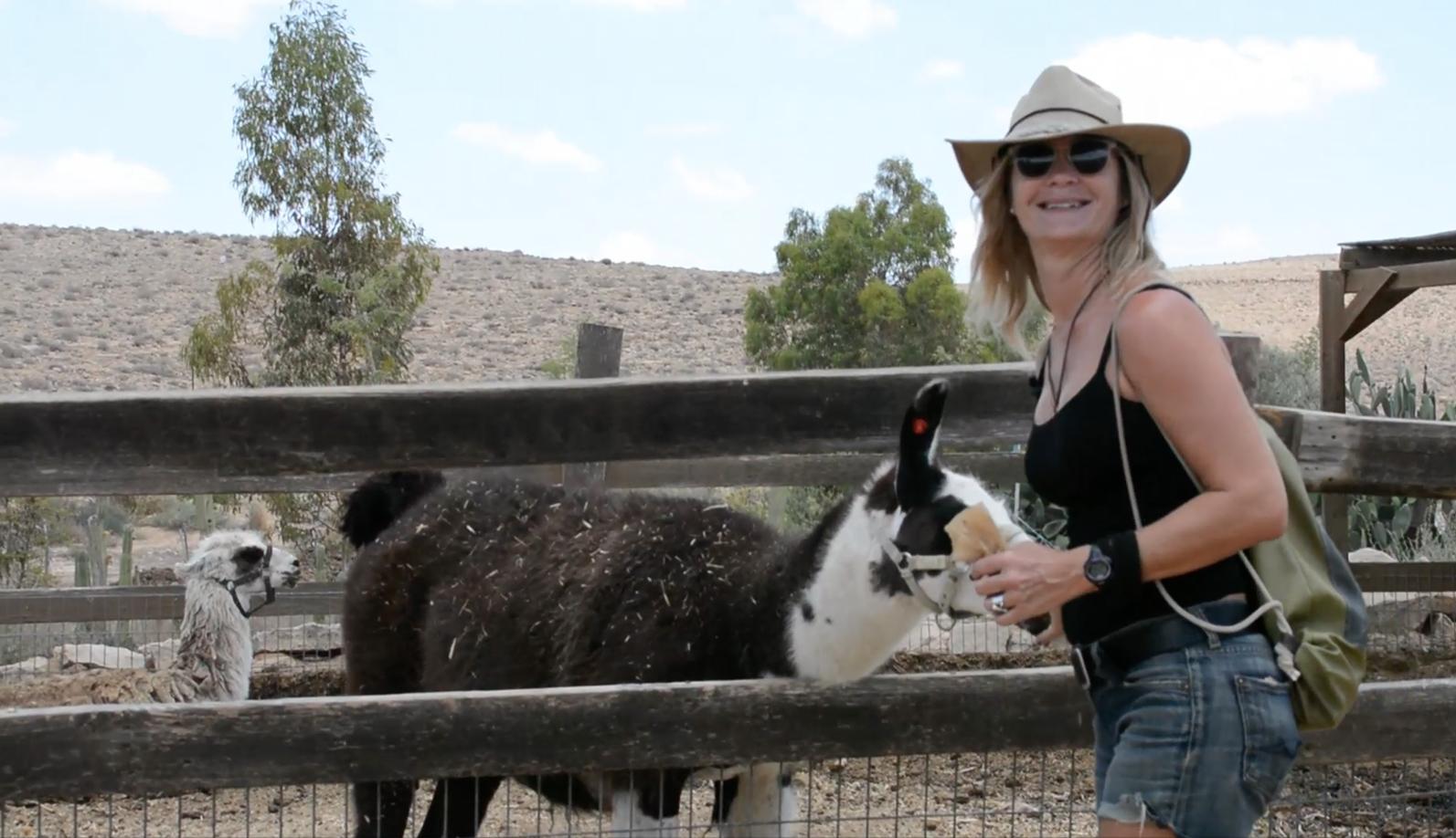 Alpaca Farm