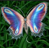 Curaluz.butterfly.jungle.medicine.music.