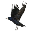 kisspng-common-raven-as-the-crow-flies-c
