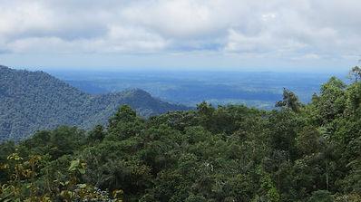 Chocó Rainforest
