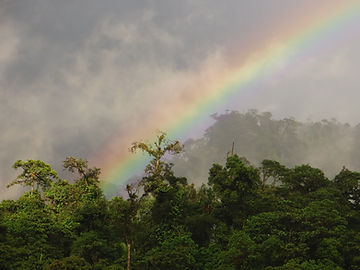 Lower montane rainforest at nature reserve in Ecuador Sout America