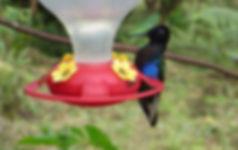 Forschungsprojekt Kolibris Biologische Station Un poco del Chocó Ecuador Südamerika