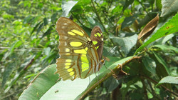 Biodiversity Surveys & Inventories