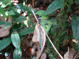 Ecotourism Nature Reserve Un poco del Chocó Ecuador South America