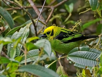 A few new bird species in the reserve