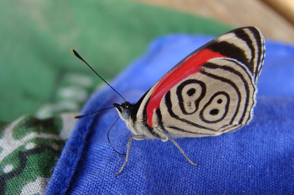 Lepidopteren Projekt