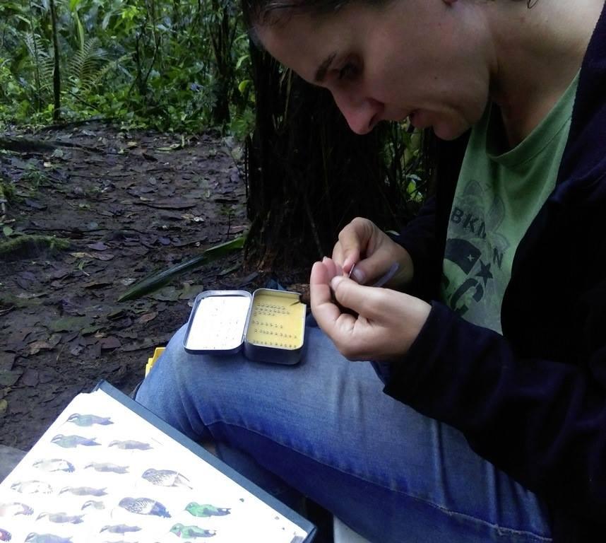 Banding a hummer