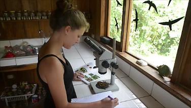 Research Traineeship Internship Biology Biological Station Un poco del Chocó Ecuador South America