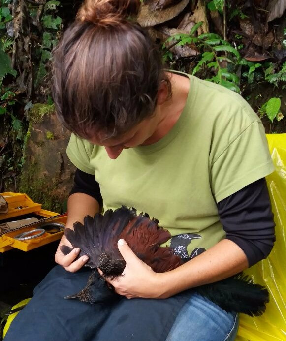 Banding a Banded Ground-Cuckoo! Luckily I had the right T-Shirt on!