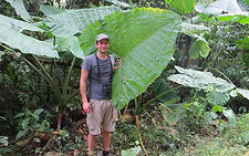 Giant leaf in nature reserve and biological station in Ecuador South America