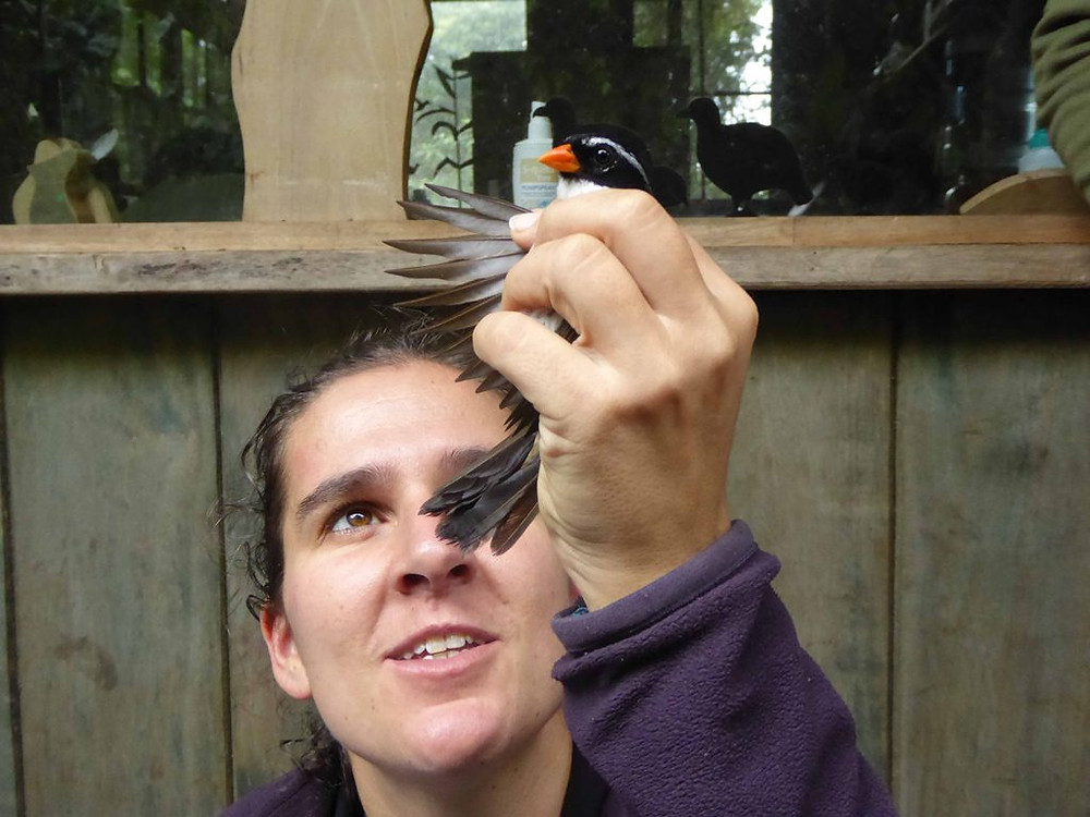 Nicole checking the bird for feather lice