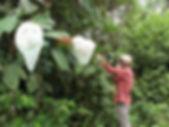 Biology Internship Biological Station Un poco del Chocó Ecuador South America