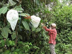 Biologische Feldarbeit auf Biologischen Station in Ecuador Südamerika stellt sich vor.