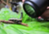 Insektenmakro Biologische Station in Ecuador Südamerika