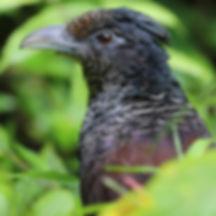 Spenden für Lebensraumschutz im Chocó Regenwald