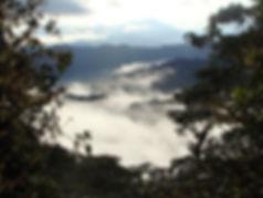 Chocó Regenwald in Ecuador Südamerika