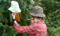 Nectar measurements