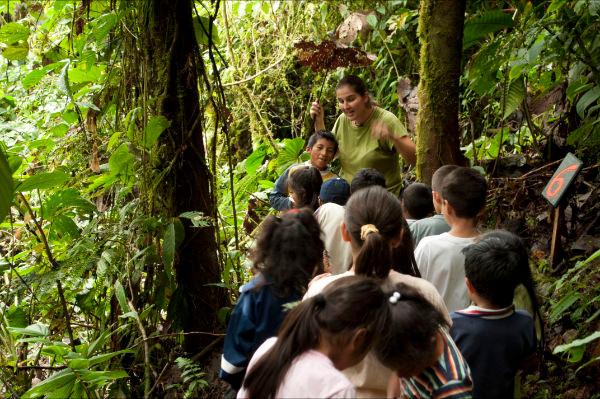 Nicole showing a Cecropia tree
