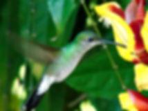 Forschungsprojekt Bestäubungsökologie Biologische Station Un poco del Chocó Ecuador Südamerika