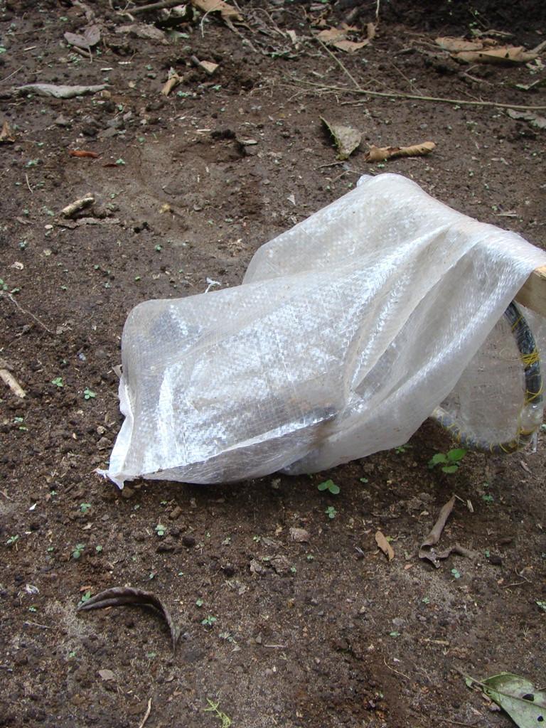 Snake in bag