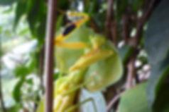 Insektenökologie Biologische Station Un poco del Chocó Ecuador Südamerika