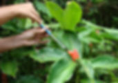 Studienprojekt Nektarmessung Biologische Station Ecuador Südamerika