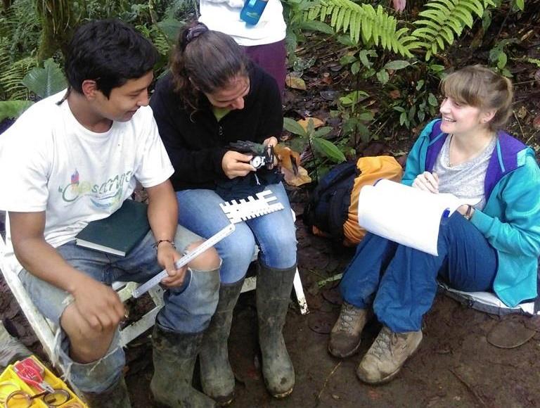 Measuring the Broad-billed Motmot