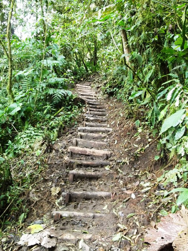 The new steps