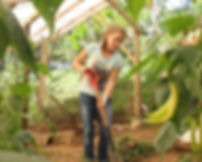 Volunteer working in organic garden at nature reserve and biological station in Ecuador-South America.