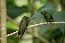 Plant-pollinator network ecology