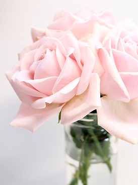 close-up-photography-of-roses-1167050.jp