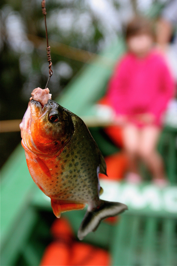 13 Fishing for piranhas in the Amazon ju