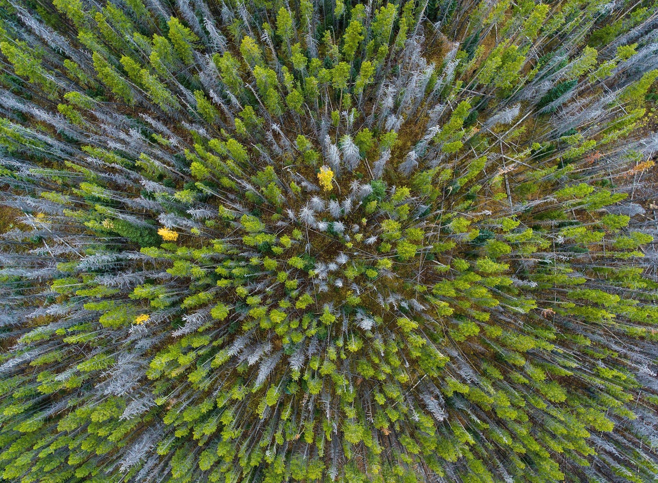 Inventering skog drönare