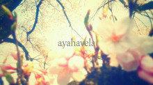 aromatic message photo ~愛の力sakura~