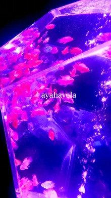aromatic message photo ~cosmic joke~