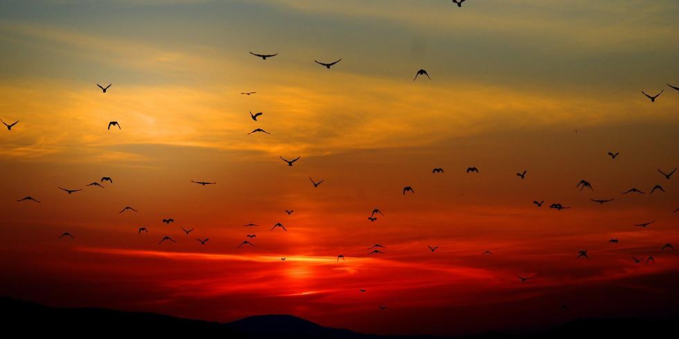Trasy przelotów ptaków