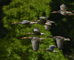 flock-of-birds-350290_1920.jpg