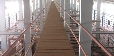 Long Building L_L Cattle Yards MS  (2).j