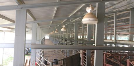Long Building L_L Cattle Yards MS  (1).j