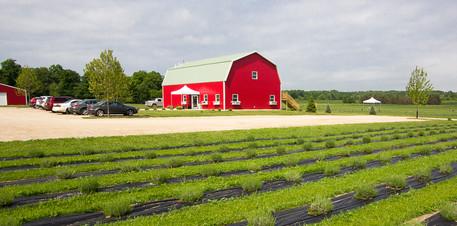 UABS Shop for Lavender Farm MI (3).jpg