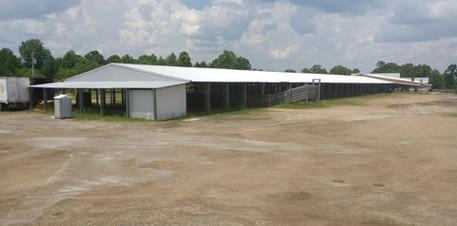 Long Building L_L Cattle Yards MS  (5).j