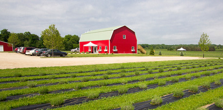 UABS Shop for Lavender Farm MI (6).jpg