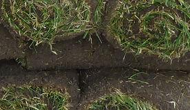 Macdonnell Turf Farms - Sod Rolls