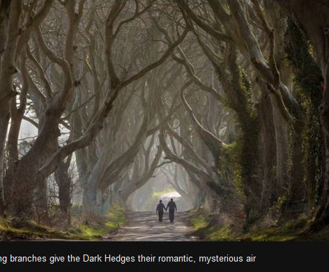 dark hedges forset.jpg
