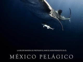 """Ka'Yok presentará """"México Pelágico"""", documental donde Quintana Roo es uno de los protagonistas."""