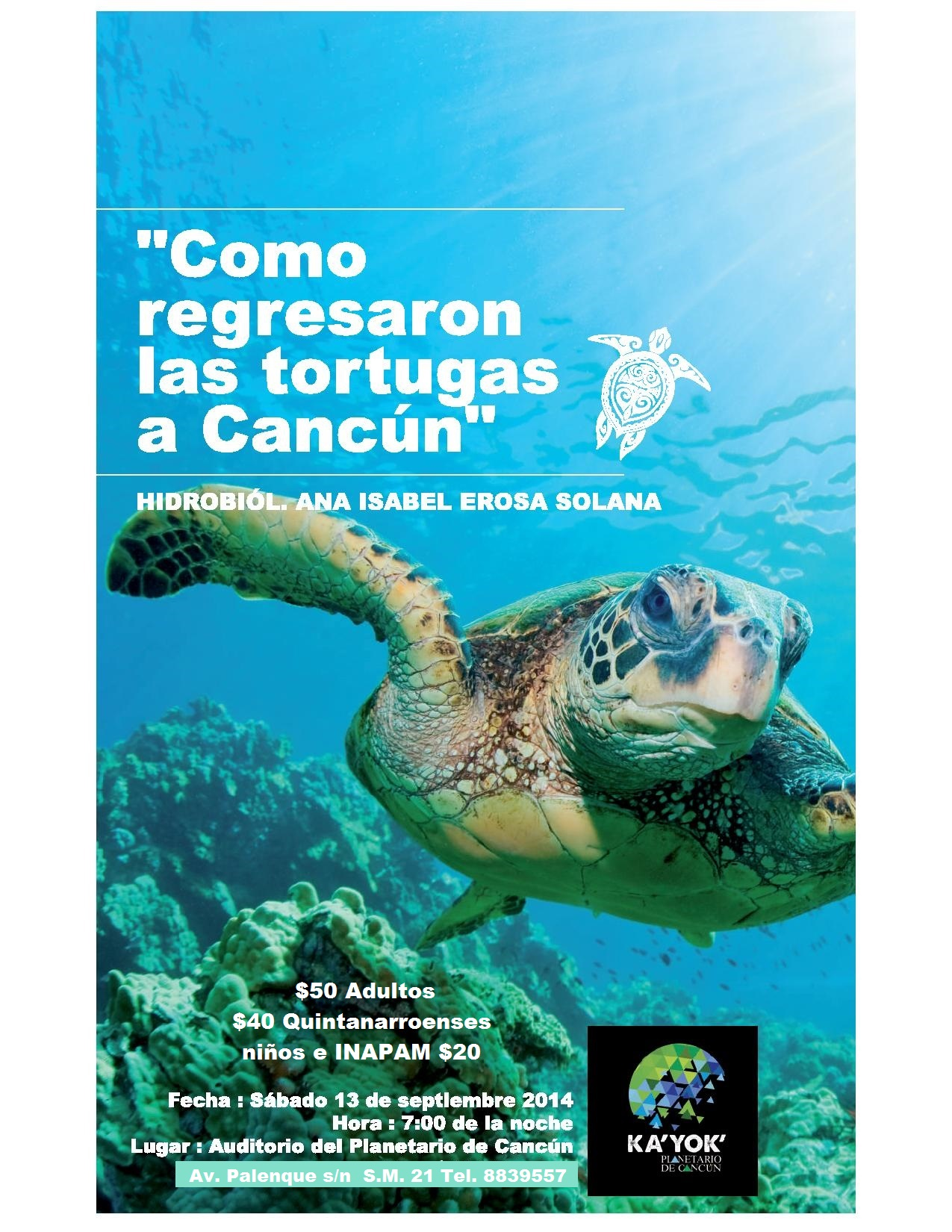como regresan las tortugas a cancun